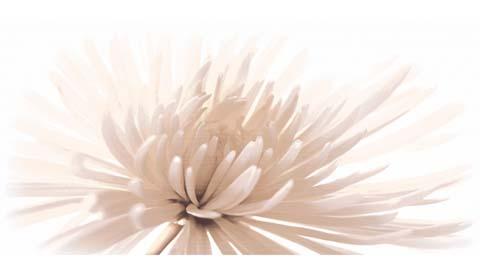 Декор Emma белый (C-EA2L051D)<br>